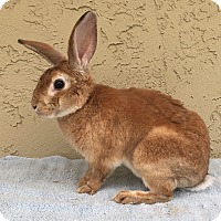 Adopt A Pet :: Jason - Bonita, CA