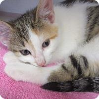 Adopt A Pet :: Suzanne - Oakland Park, FL