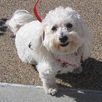 Adopt A Pet :: Obi - Vista, CA