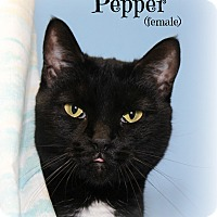 Adopt A Pet :: Pepper - Glen Mills, PA