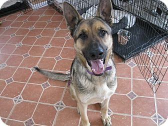 German Shepherd Dog Mix Dog for adoption in Greeneville, Tennessee - Roane