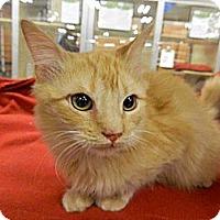 Adopt A Pet :: Trevor - The Colony, TX