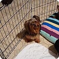 Adopt A Pet :: Macey - Lorain, OH