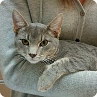 Adopt A Pet :: Grumpy - Raritan, NJ