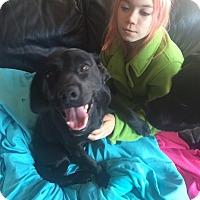Adopt A Pet :: Tango - Burlington, NJ