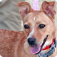 Adopt A Pet :: Sadie - Palmdale, CA