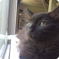 Adopt A Pet :: Jerry - Stafford, VA
