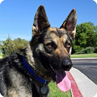 Adopt A Pet :: Patch - San Diego, CA