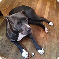 Adopt A Pet :: Daniella - Manhattan, NY