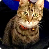 Adopt A Pet :: Cora - Toronto, ON