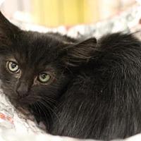 Adopt A Pet :: Butchie - Sacramento, CA