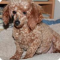 Adopt A Pet :: Crimson - Colorado Springs, CO