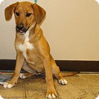 Adopt A Pet :: Pandi - Oviedo, FL