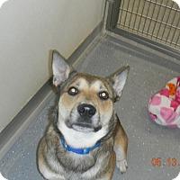 Adopt A Pet :: JAX - Sandusky, OH
