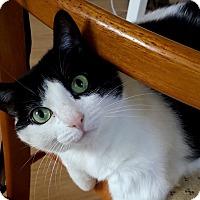 Adopt A Pet :: Mira - Toronto, ON