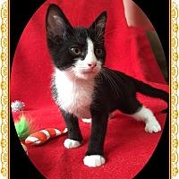Adopt A Pet :: Darrin - Mt. Prospect, IL