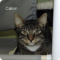Adopt A Pet :: Calvin - Slidell, LA