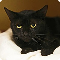 Adopt A Pet :: Lavender - Kettering, OH