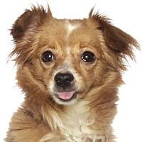 Adopt A Pet :: Bubble - Oakland Park, FL