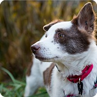 Adopt A Pet :: HILDE - Wonder Lake, IL
