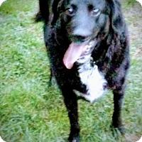 Adopt A Pet :: Maverick - Akron, OH