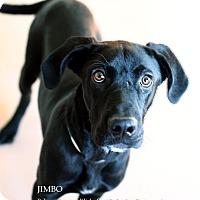 Adopt A Pet :: Jimbo - Appleton, WI