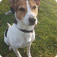 Adopt A Pet :: Olivia Newton - Grayslake, IL
