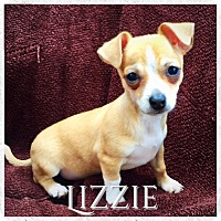 Adopt A Pet :: Lizzie - Fort Collins, CO