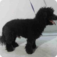 Adopt A Pet :: A371159 - Orlando, FL