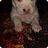 Adopt A Pet :: Hugo - Roaring Spring, PA