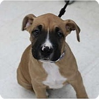 Adopt A Pet :: Riley - ARDEN, NC