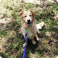 Adopt A Pet :: Rosie - Dundee, FL