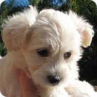 Adopt A Pet :: Kimi - La Costa, CA