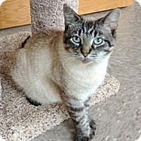 Adopt A Pet :: Sheva - Byron Center, MI