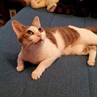 Adopt A Pet :: kimber - Loganville, GA