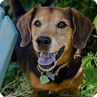 Adopt A Pet :: Bella - Salt Lake City, UT