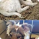Adopt A Pet :: Susan's Pup Rusty