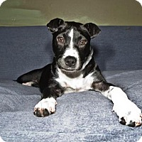 Adopt A Pet :: Sally - Pearland, TX