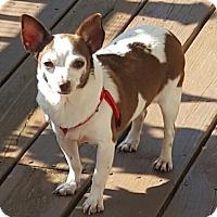 Adopt A Pet :: Taffy - Taylorsville, KY - Dayton, OH