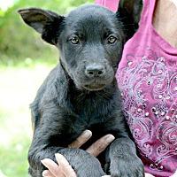 Adopt A Pet :: Lizzie - Willingboro, NJ