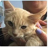 Adopt A Pet :: Isaac - Springdale, AR