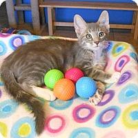 Adopt A Pet :: Jaspurr - Glendale, AZ