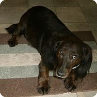 Adopt A Pet :: EMILY - Portland, OR