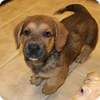 Adopt A Pet :: Peety - Rochester, NY
