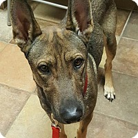Adopt A Pet :: Zaxby - Salt Lake City, UT