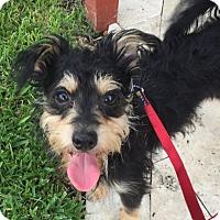 Adopt A Pet :: Dalton - Ft. Lauderdale, FL