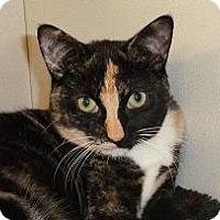 Adopt A Pet :: Roberta - Massapequa, NY