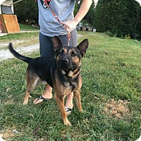 Shepherd (Unknown Type) Mix Dog for adoption in Fayetteville, West Virginia - Morpheous