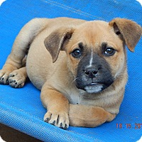 Adopt A Pet :: Whiskey(7 lb) New Pics & Video - Williamsport, MD