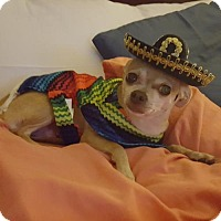 Adopt A Pet :: Carmella - Island Heights, NJ
